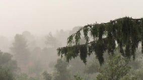 Pioggia che cade sopra i rami dell'albero forestale che ondeggiano nel vento stock footage