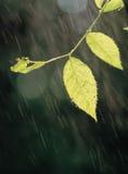 Pioggia con i fogli Fotografia Stock