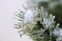 Pioggia congelata Immagine Stock