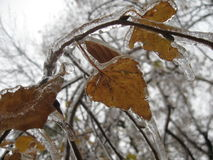 Pioggia congelata Immagini Stock Libere da Diritti
