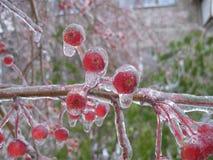 Pioggia congelata Fotografia Stock