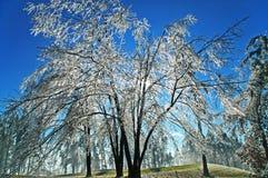 Pioggia congelata Fotografie Stock Libere da Diritti