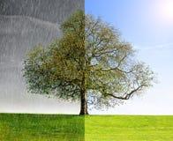 Pioggia del collage contro il sole Immagine Stock