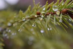 Pioggia della doccia della primavera Fotografie Stock Libere da Diritti