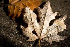 Pioggia di autunno sulla foglia Fotografia Stock