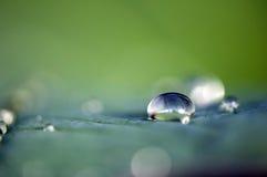 pioggia di goccia Fotografie Stock