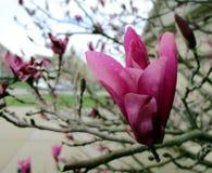 Pioggia di primavera Immagine Stock