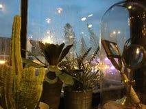 Pioggia di sera Immagine Stock