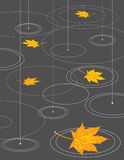 Pioggia e foglie di acero illustrazione di stock