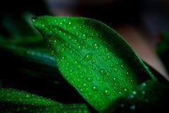 Pioggia e gocce Immagine Stock