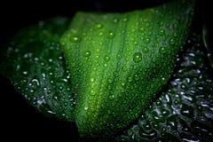 Pioggia e gocce Fotografia Stock Libera da Diritti