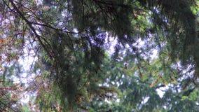 Pioggia e sole in pino video d archivio