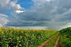 Pioggia e Sun Fotografie Stock Libere da Diritti