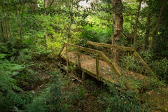 Pioggia Forest Bridge Immagine Stock Libera da Diritti