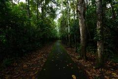 Pioggia Forest Path Immagine Stock