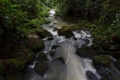 Pioggia Forest Stream - esposizione lunga Immagine Stock Libera da Diritti