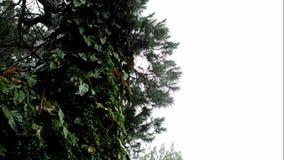 Pioggia, nebbia, foschia sopra il fondo della vegetazione e dell'albero o il video di titolo video d archivio