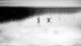 Pioggia nel lago Fotografie Stock Libere da Diritti
