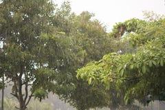 Pioggia nella foresta Fotografie Stock