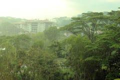 Pioggia nella foresta pluviale Fotografia Stock