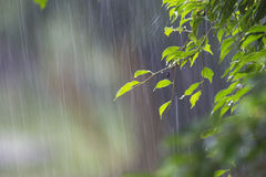 Pioggia persistente Fotografia Stock