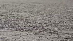 Pioggia persistente video d archivio