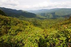 Pioggia più forrest in Costa Rica, America Centrale immagine stock libera da diritti