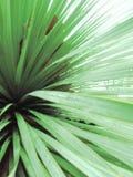 Pioggia su un cactus Fotografia Stock