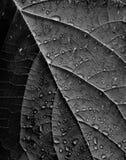 Pioggia sulla fine del foglio in su Fotografia Stock Libera da Diritti
