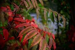 Pioggia sulle foglie Fotografia Stock Libera da Diritti