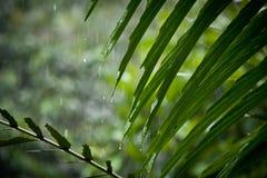 Pioggia sulle foglie, mosso Fotografia Stock
