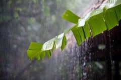 Pioggia torrenziale nei rainfores tropicali Immagine Stock