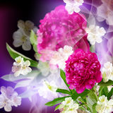 Pion and  flowers cherry Royalty Free Stock Image