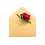 Pion i ett kuvert Royaltyfria Bilder