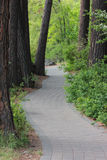 Pioneer Park Path Royalty Free Stock Photo