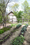 Pioneer vegetable garden. Vegetable garden with a rail fence and pioneer cabin in the background Royalty Free Stock Photography