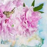 Pionen blommar med fjärilen royaltyfri fotografi