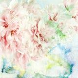 Pionen blommar på målad bakgrund royaltyfri fotografi