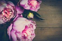 Pionen blommar tappning Arkivbilder