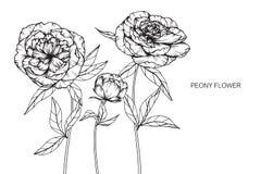 Pionen blommar teckningen och skissar med linje-konst Royaltyfri Fotografi