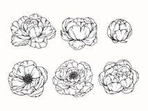Pionen blommar teckningen och skissar med linje-konst Arkivfoto