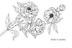 Pionen blommar teckningen och skissar med linje-konst Fotografering för Bildbyråer