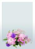 Pioner för rosa färger för hälsningkort Fotografering för Bildbyråer