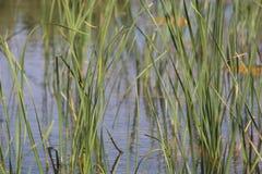 Pionierpark Waterscape Lizenzfreies Stockbild