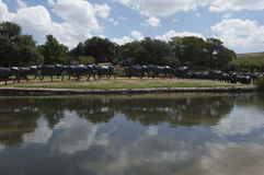 Pionierpiazzamarkstein in Dallas, TX Stockbilder