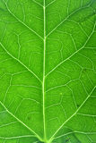 pionowe liści makro Obrazy Royalty Free