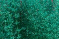 Pionowego Aqua tekstury Bambusowy tło obraz stock