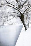 Pionowo fotografia drzewo na banku rzeka obraz royalty free