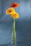 Pionowo fotografii gerberas stoi w wazie Obraz Stock