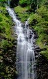 Pionowo panorama wysoka malownicza siklawa w bujny zieleni lasu krajobrazie zdjęcie stock